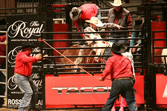 RAWF15 JSteadman 0126 (RoyalPhotographyTeam) Tags: sun royal rodeo 2015 rawf nov08