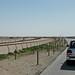 doha camel race (6)