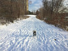 He is flying! (lezumbalaberenjena) Tags: winter hiver invierno frio cold froid nieve niege snow white blanco blanca blanc blanche ottawa rideau river trail 2016 december diciembre decembre dog perro chien chiot boston terrier bully