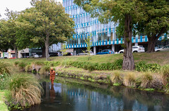 I Feel Lonely (Jocey K) Tags: newzealand southisland christchurch cbd architecture buildings stay gormleystatue statue river reflections water avon avonriver trees