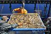 Crab Harvest - Nighttime unloading (johnhershey1) Tags: annabelle diego moose tony crab