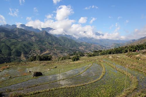Sapa's rice fields