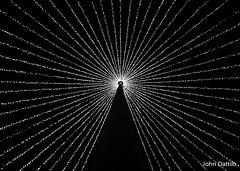Inside a Christmas tree made of light (flintframer) Tags: opryland hotel bw black white nashville tn canon t3i ef50mm