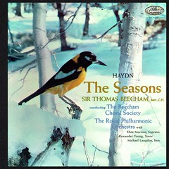 Haydn The Seasons - Beecham Capitol 1 (sacqueboutier) Tags: vintage vinyl vinylcollection vinyllover vinylnation vinylcollector lp lplover lps lpcollection lpcover lpcollector lpcoverart records record recordcollector recordings recordlover music classical classicalmusic capitol