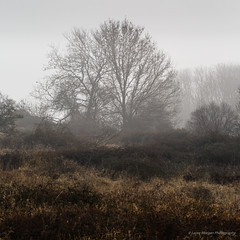 Kingley_Vale_Jan_2017_108.jpg (Laura Morgan Photography) Tags: chichester england ancientforest landscape kingleyvale