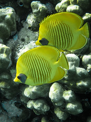 Coral reef in the Red sea (Oleg.A) Tags: redsea summer underwater nature resort marsaalam egypt seascape reef outdoor sea abudabbabbay outdoors redseagovernorate eg