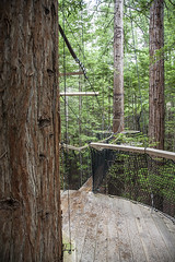 IMG_8959 copy (AsianInsights) Tags: newzealand northisland asiapacific holiday nature 2016 december fern ferntree forest rotorua forestresearchinstitute research redwoods redwood treewalk redwoodforest