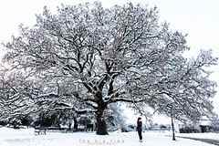The big tree (giusmelix) Tags: neve snow laconi santa sofia albero grande big tree ragazza girl giusmelix giuseppemelis canon eos 5d markiii mk3 mkiii 24105mm sudominariu