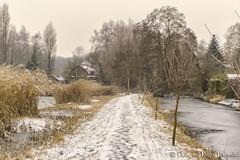 Snowy scenery. (PvRFotografie) Tags: nederland holland nature natuur sneeuw snow landscape landschap scenery winter tree trees bomen boom riet cold koud sony20mmf28 20mm rotterdam rotterdamzuid zuiderpark outdoor sonyilca99m2