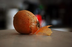 """Tentacles"" and Tears (Haytham M.) Tags: peel tentacles tears food kitchen onion"