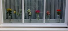 HWW (truus1949) Tags: stadswandeling den bosch hww bloemen selfie tekst