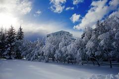 Winter (skolavellir12) Tags: winter selfoss iceland snow sun light trees conon