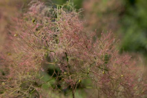 cloudehill gardens-5