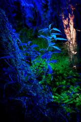 Brennnessel / Stinging nettle (Craebby) Tags: blue plants fern color green colors night canon germany deutschland eos nightshot nacht pflanzen nrw grn blau urtica farn farben nachtaufnahme brennessel stingingnettle nessel farbenspiel 700d canoneos700d urticaceaeurticadioica