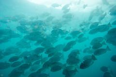 20150927-DSC_6722.jpg (d3_plus) Tags: sea sky fish beach japan scenery underwater diving snorkeling  shizuoka    apnea izu j4            1030mm  nakagi 1   1030mmpd wpn3