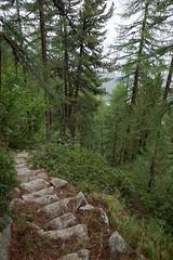 slippery slope (Riex) Tags: mountain alps stairs forest montagne alpes schweiz switzerland fort path steps trail fujifilm svizzera foret chemin engadine escaliers marches pontresina graubnden grisons xm1 graubunden puntraschigna xtrans fujinonxc1650mmf3556ois muottaspuntraschigna muottasdapuntraschigna