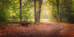 Peaceful Spot (Elizabeth_211) Tags: trees light panorama fog forest bench path tennessee jacksontn pinsonmounds westtn sherielizabeth