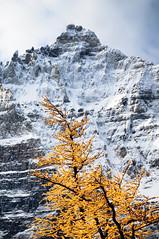 Eiffel Lake III (Davey S) Tags: alberta lakelouise larches larchvalley valleyofthetenpeaks larchtrees eiffellake