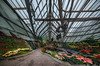 Lincoln Park Conservatory - green house (Jovan Jimenez) Tags: samsung smg935t galaxy s7 edge rear camera lincoln park conservatory hdr panorama pano autopano autopanopro giga pro cell phone kolor creative cloud adobe fv5 flowers pants green house pixel architecture chicago glass mobile indoors interior ceiling