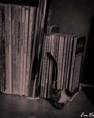 Classics (Lalykse) Tags: balzac bovary camus disney emvaphotography flaubert montesquieu nikond3200 voltaire books classics classiques livres
