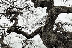 Hämeenlinna (Tuomo Lindfors) Tags: hämeenlinna suomi finland tori marketsquare puu tree theacademytreealley dxo filmpack