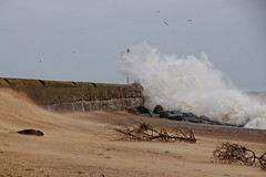 Stormy Weather (Colin Kavanagh) Tags: storm stormy waves pier arklow wicklow ireland seal sand wind weather extremeweather trees wood rocks dull spray cloudy crashing ngc theworldisbeautiful