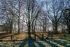 Ickworth Park-3771 (johnboy!) Tags: ickworthpark ickworthhouse ickworth deadtrees nationaltrust