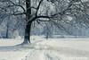Passeggiata invernale (beppeverge) Tags: beppeverge inverno neve nevicata snow winter borgosesia piemonte italia it