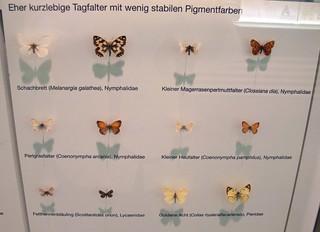 Tagfalter P1030946