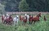 Petronius Arabians (Jagoda 1410) Tags: petroniusarabians equine equinephotography horse arabianhorse farm outdoor animal horseinmotion horses animals