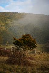 Kingley_Vale_Jan_2017_120.jpg (Laura Morgan Photography) Tags: chichester england ancientforest landscape kingleyvale