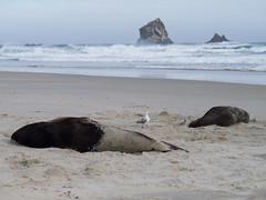 424 - Lions de mer qui dorment