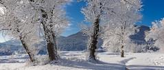 Cerknica Lake (happy.apple) Tags: cerknicalake cerkniškojezero winter zima snow sneg slovenija slovenia rešeto otok cerknica si