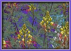 Yellow Bird-of-Paradise (Sugardxn) Tags: southwest flower yellow photoshop canon botanical canon20d albuquerque canoneos20d birdofparadise desertbirdofparadise yellowbirdofparadise sugardxn