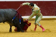 DSC_9423.jpg (josi unanue) Tags: animal blood spain bull arena bullfighter sansebastian esp toro traje asta sangre espada bullring unanue guipuzcoa matador torero tauromaquia sufrimiento cuerno ureña banderilla banderilero