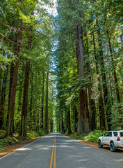 Avenue of the Giants--DSC1208--Humbolt County, CA (Lance & Cromwell back from a Road Trip) Tags: california statepark nationalpark sony northern avenueofthegiants a55 avenueofgiants coastredwoods humboltcounty sonyalpha