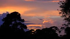 Erika's Remnants (Jim Mullhaupt) Tags: pink blue sunset red wallpaper sky orange sun storm color tree rain weather silhouette yellow clouds landscape gold evening nikon sundown wind florida dusk hurricane palm exotic p900 tropical coolpix erika lightning thunder bradenton tropicalstorm endofday weatherphotography cloudsstormssunsetssunrises nikoncoolpixp900 coolpixp900 nikonp900 jimmullhaupt