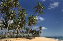 Penarik Beach, Terengganu, Malaysia (Abamjiwa Al-Hadi) Tags: ocean blue sea vacation holiday tree tourism beach nature coconut malaysia terengganu artofnature tourismmalaysia penarik pantaipenarik aongo2015