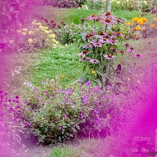 Jardin des Plantes-1404