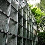 新宿御苑RGBの写真
