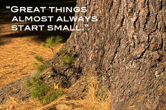 Great Things (Light Collector) Tags: old autumn tree fall pine outdoors quote young bark needles seedling