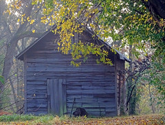 Hanser Barn (Wits End Photography) Tags: wood old morning autumn light sun plant building tree fall texture abandoned nature colors leaves architecture barn rural america forest sunrise season outside dawn daylight early illinois am woods midwest exterior outdoor decay farm country neglected structure pale foliage faded forgotten american worn weathered discarded forsaken rejected decayed bleached faint sunup daybreak morn firstlight edwardsville discolored
