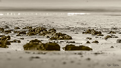 BEACH ROCKS (Kais Kraiem) Tags: sea white black beach water monochrome rocks rasalkhaima blackwhitephotos