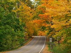 Autumnal Foliage (Gavin Edmondstone) Tags: autumn ontario burlington gx8 cans2s