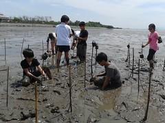10.12.2015-AngloSingapore-BangPu-100 trees (20) (pattfoundation2014) Tags: thailand education mangrove treeplanting bangpu pattfoundation anglosingapore