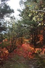 mlange de couleurs (luka116) Tags: suisse paysage wallis valais 2015 cotinuscoggygria turtmann arbustre getwing
