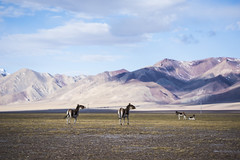 CYM_8428 (nature1970613) Tags: china tibet