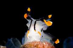 _MG_3328-16032015-Romblon copia (azotati2011) Tags: underwater romblon filippine