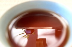 Sombra de t puerh (Tetere Barcelona) Tags: shadow tea sombra te teacup teatime cha vaso transparente teteria celadon transparencia puerhtea yingzi teteriabarcelona tetereria tepuerh
