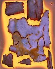 Paperbark Writer II (Abhiks) Tags: old sun flower darkroom skool bark printing contact hyacinth lumen